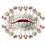 Взаимосвязь зубов и органов